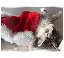 Libby - Maine Coon cat and her favourite toy Poster
