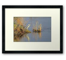 """Hungry Heron"" Framed Print"
