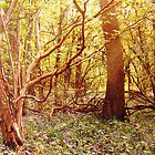 Bluebell Woods 3 by Holly Daniels