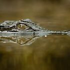 Croc reflection by Johan Larson