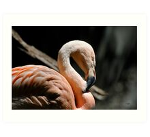 The Sacred Old Flamingoes Art Print