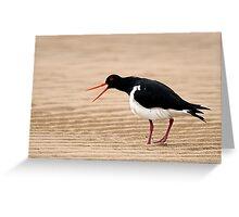 """Go Away"" - Pied Oystercatcher, Tathra Beach Greeting Card"