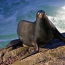 Sea Lion Exit by Randall Ingalls