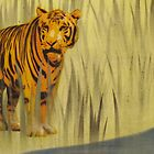 Tiger In The Grass by Nicole Tattersall