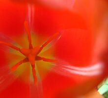 Tulip Bright by MarianBendeth