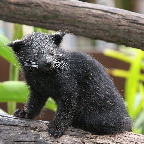 new bearcat spreader truck for sale