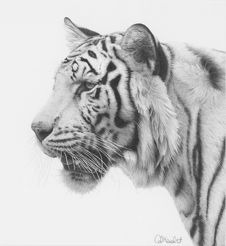 White tiger by clive meredith