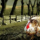 Country Turkey