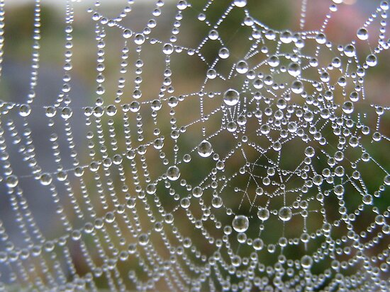 http://ih2.redbubble.net/work.4363262.1.flat,550x550,075,f.indras-web-spiders-web-laden-with-dew.jpg