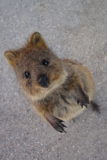 Quokka! « Me, we, them
