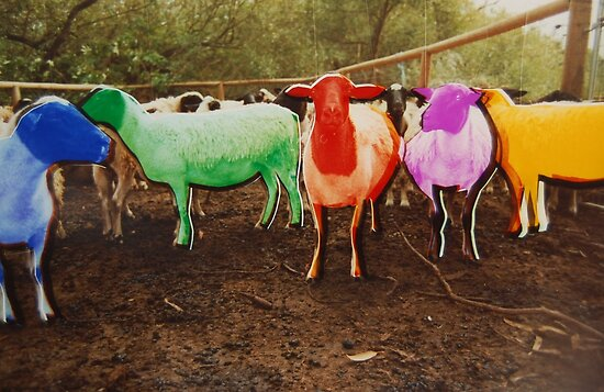 http://ih2.redbubble.net/work.4451086.3.flat,550x550,075,f.rainbow-sheep.jpg
