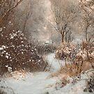 amazing winter by Patrycja Makowska