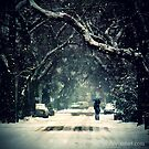 Snow Photography: Love The Snow by valyeszter