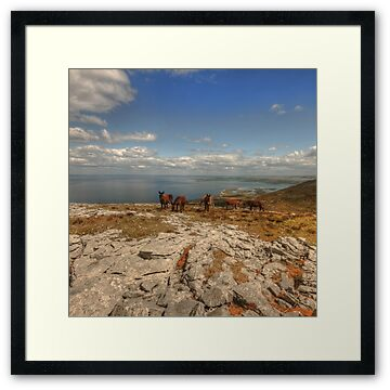 Donkeys grazing in beautiful scenic location in The Burren in county Clare at Black Head
