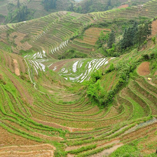 terraces in china. Longji Terraces, Guilin, China