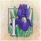 I is for Iris