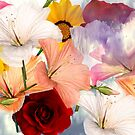 flower collage layout by toady8