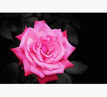 Pink Lady Photographic Print by Stephen Mitchell