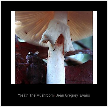 'Neath The Mushroom