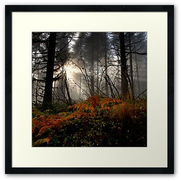 Looking through the fog as the sun rays glow in the forest.  Picture taken by Charles Harkins