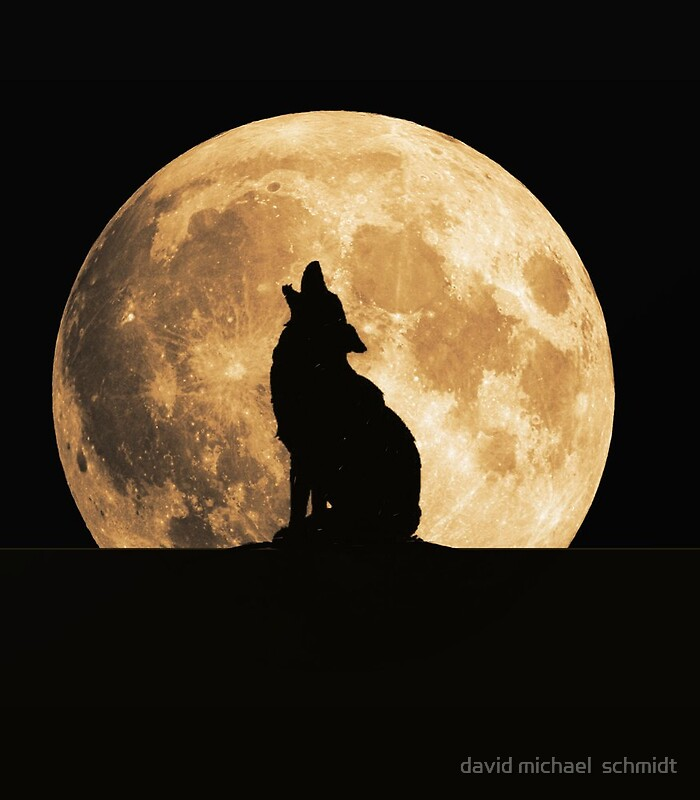 Coyote Howling At The Moon  Coyote Howling ...