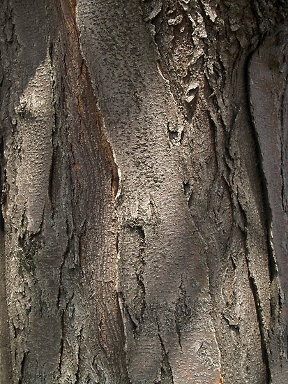 """Honey Locust Tree Bark"" by Anna Lisa Yoder 