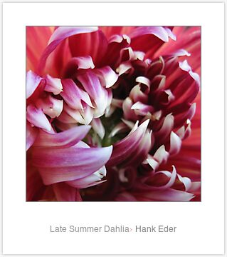 Late Summer Dahlia featured in Pagan Ways group
